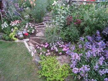 宿根草を中心に、所狭しとお花たちが競演しています