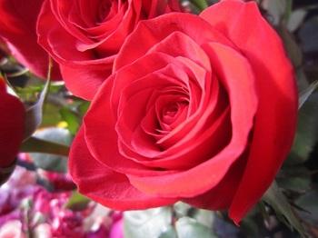 モンマルトルのバラ.jpg